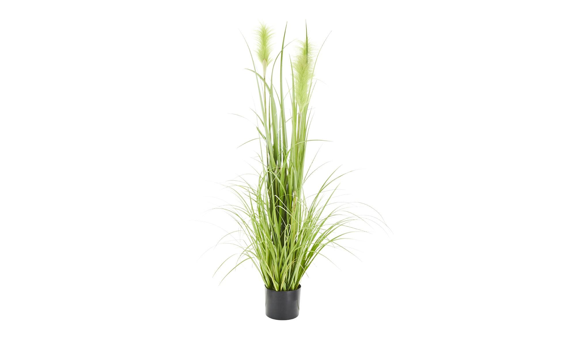 Pampasgras ¦ grün ¦ Kunststoff ¦ Maße (cm): H: 120 Dekoration > Kunstblumen günstig online kaufen